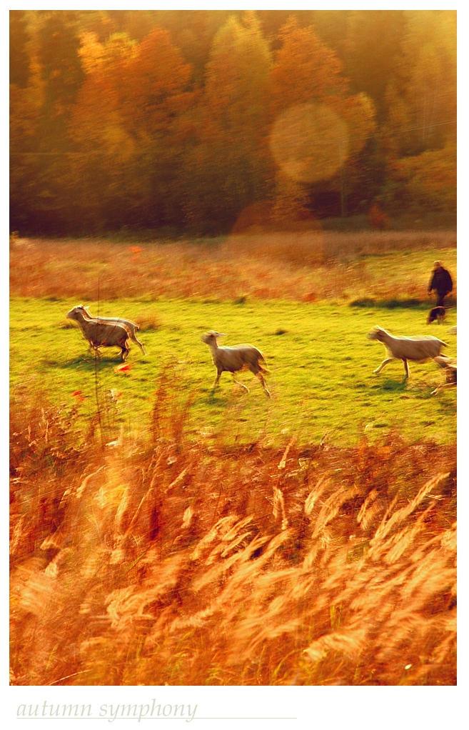 autumn symphony by syfonek