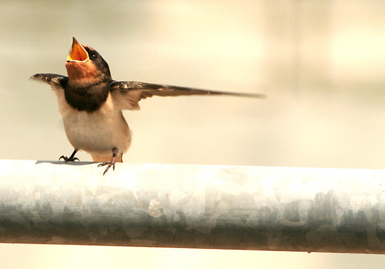 The dancing bird by ffmdotcom