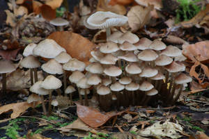 Autumn Mushrooms No. 17 by Amaries-stock