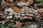 Autumn Mushrooms No. 17