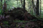Rotten Trees No. 3