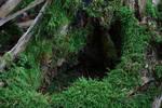 Rotten Trees No. 4b