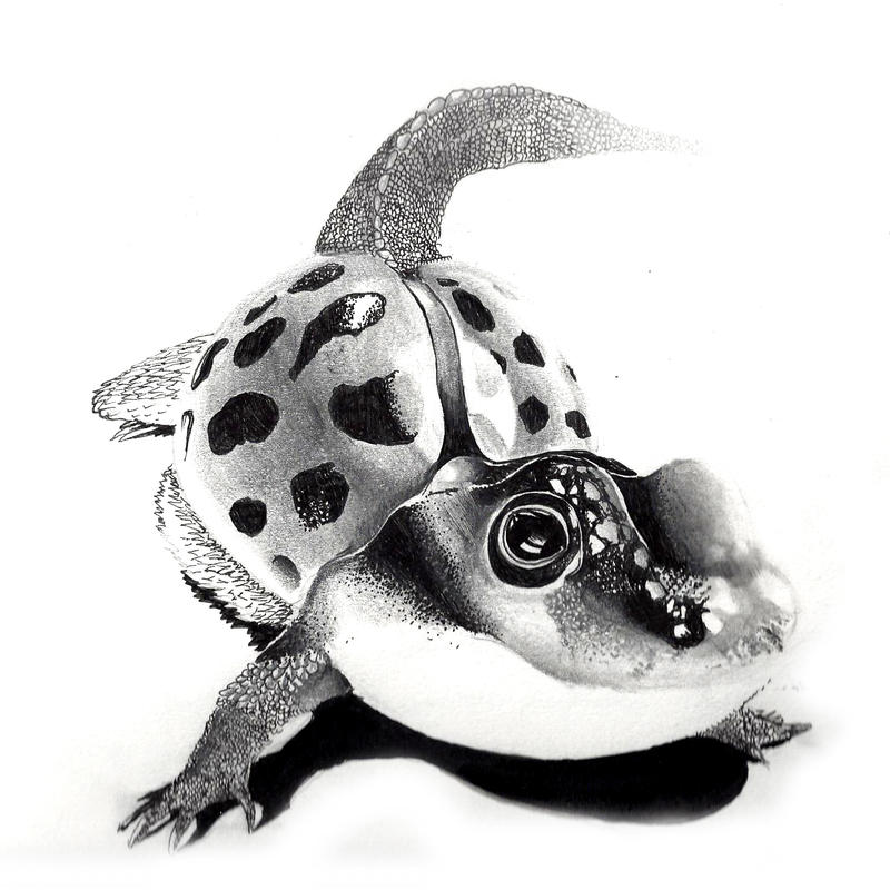 Combining animals - Ladyfrogzard by Desorienter