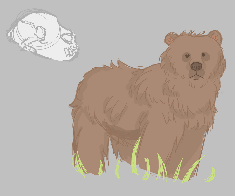 Bear anatomy practice by 0sel on DeviantArt