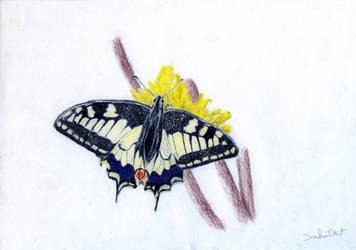 Butterfly by SouhailArt