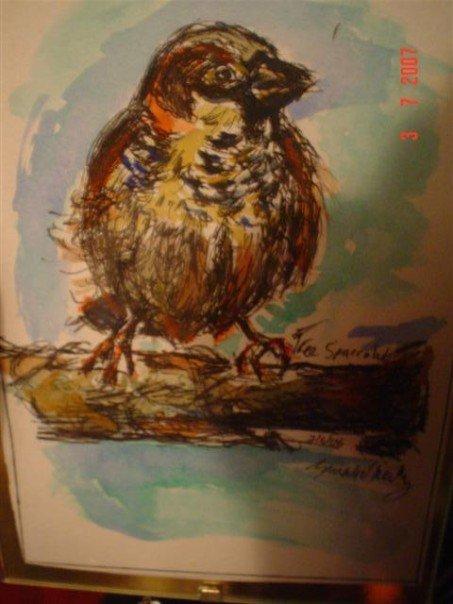 sparrow by oreillysarah