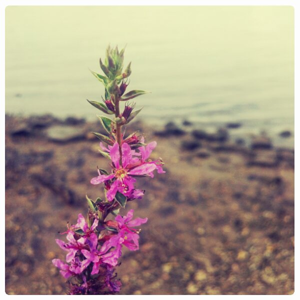 Purple Wild flowers by river by raverqueenage
