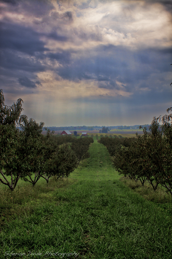 Engelbrecht Orchard by SiberianDivide