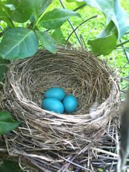 Bird's Nest by Winterlove91
