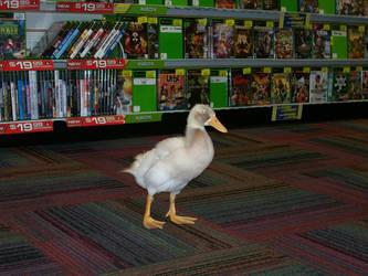 A duck in GameStop by trueloveiseternal