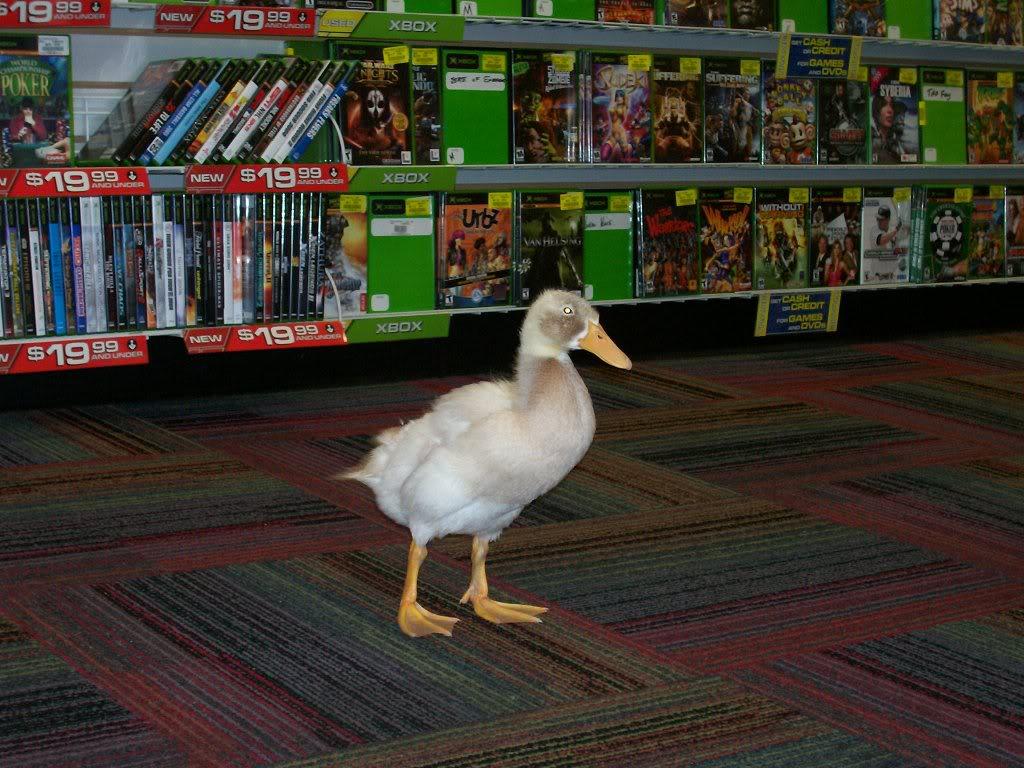 a_duck_in_gamestop_by_trueloveiseternal-