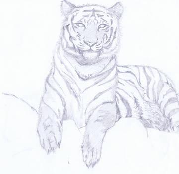 Tiger b/w by rainrivermusic