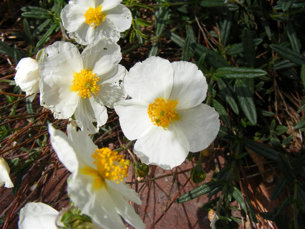 Little White And Yellow Flowers Iii By Rainrivermusic On Deviantart