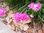 Little Chive Flowers II by rainrivermusic