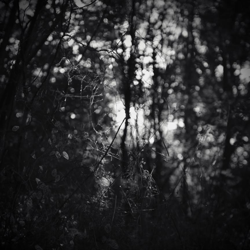 Dark Forest - Genesis by AlexandruCrisan