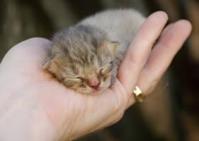 Handful of Cuteness by Pulsar-Mills