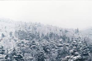 zima by TamarBurduli