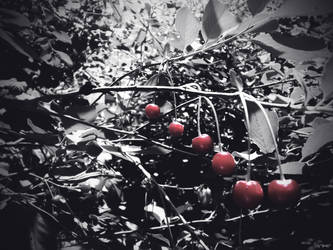 cherry by tamilla-smart