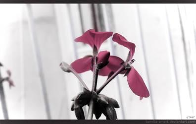 flower by tamilla-smart