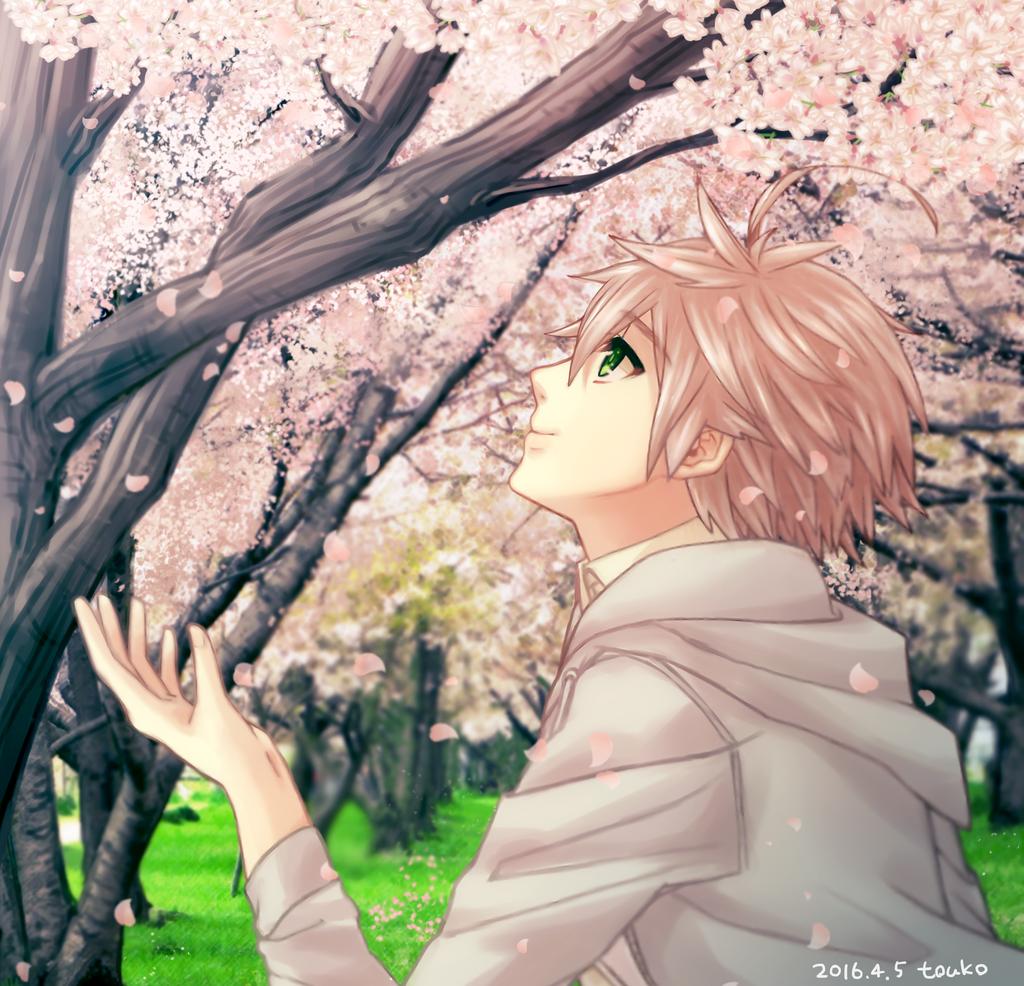 Sakura by touko-toko