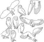 Owl Study - Illustrator
