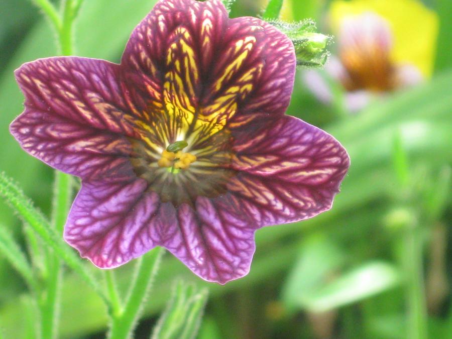 Flower 2 by Fyrebyrd-Rising