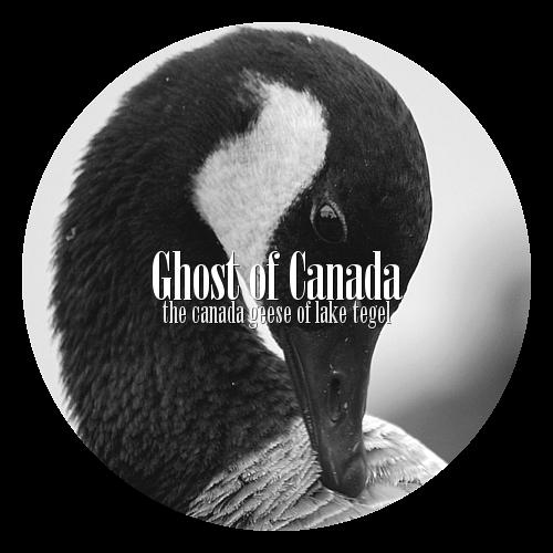 GhostOfCanada's Profile Picture