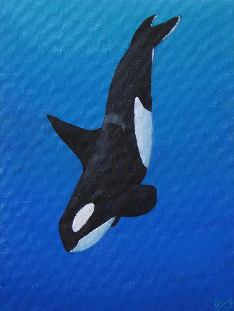 submerged killer whale - photo #13