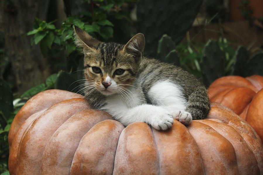Hallowe'en Kish by Ubhejane