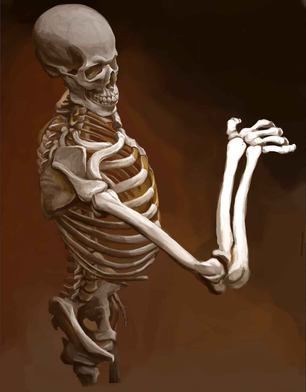 Skeleton Study by ThatMFZguy