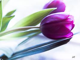 purple tulips by jakwak