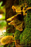 forest fungus up close