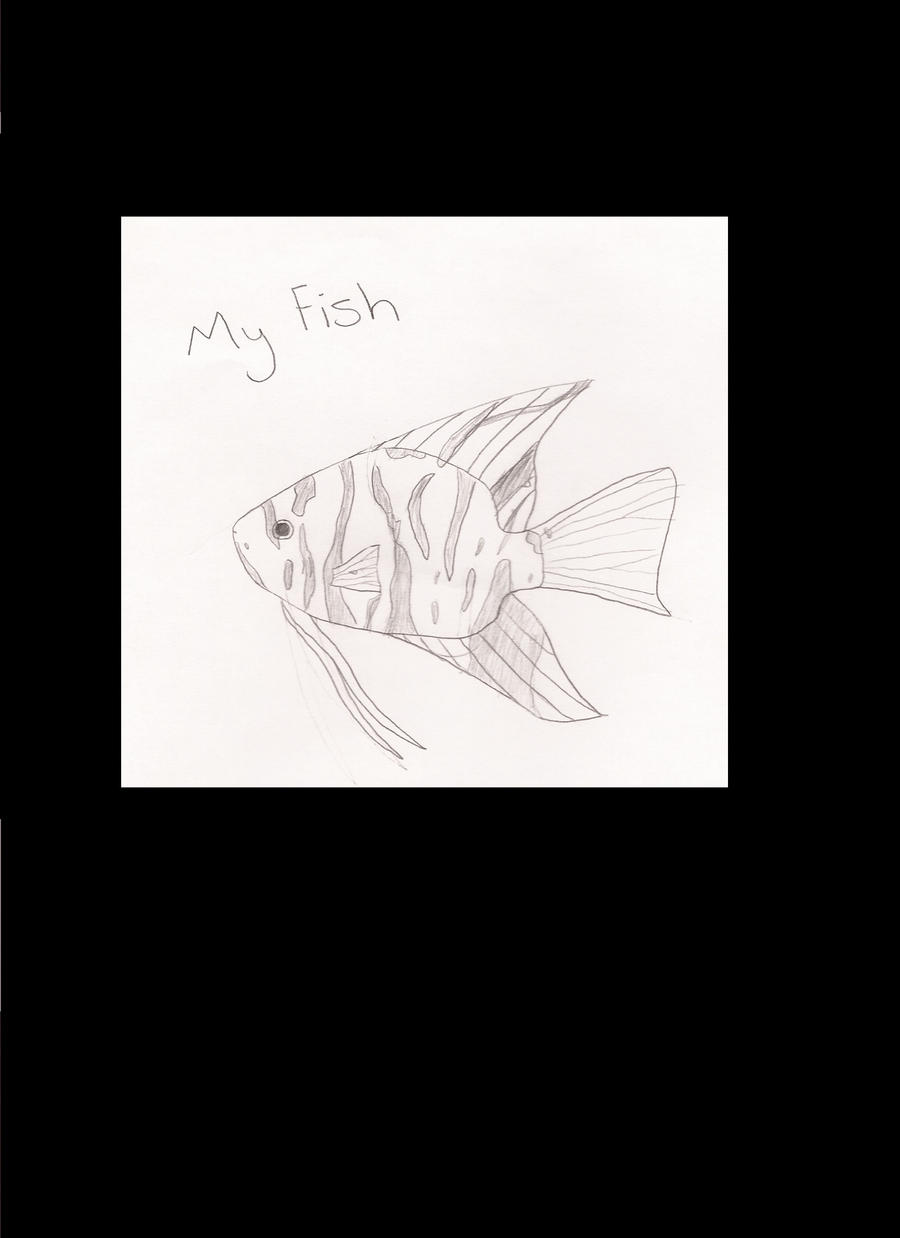 fresh water angel fish drawing by tanker fishy gal on deviantart