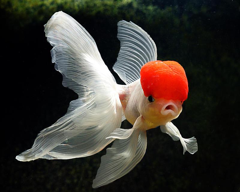 My Goldfish 2