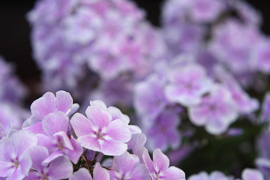 Flower Wallpaper by Woz1