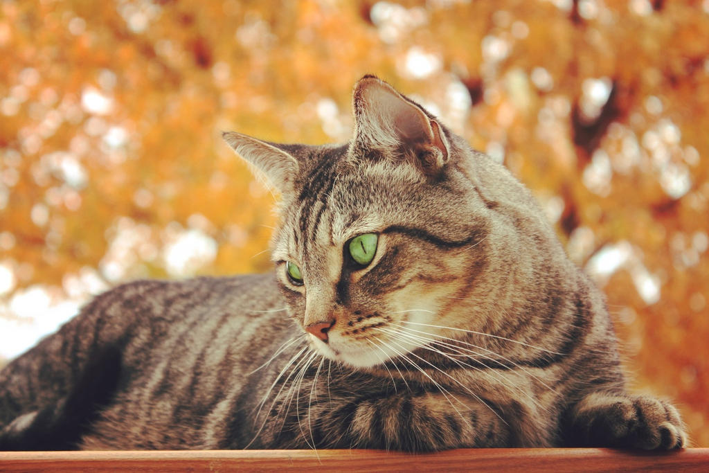 Cats Best Nature Gold  L