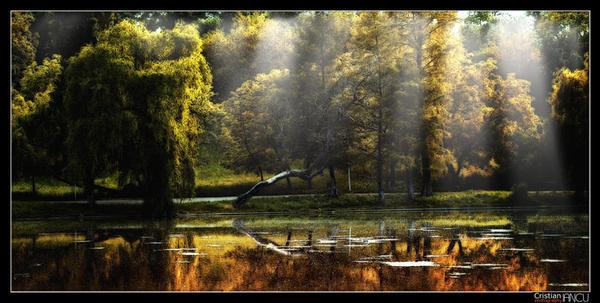 the elfs' forest 3 by jediRomania