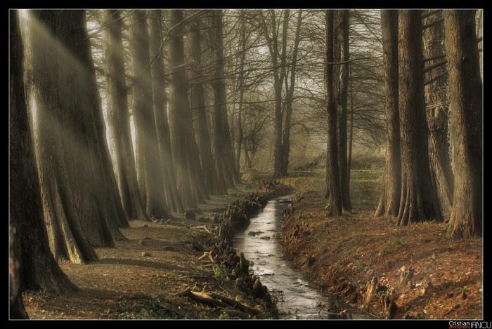 the elfs' forest 6 by jediRomania
