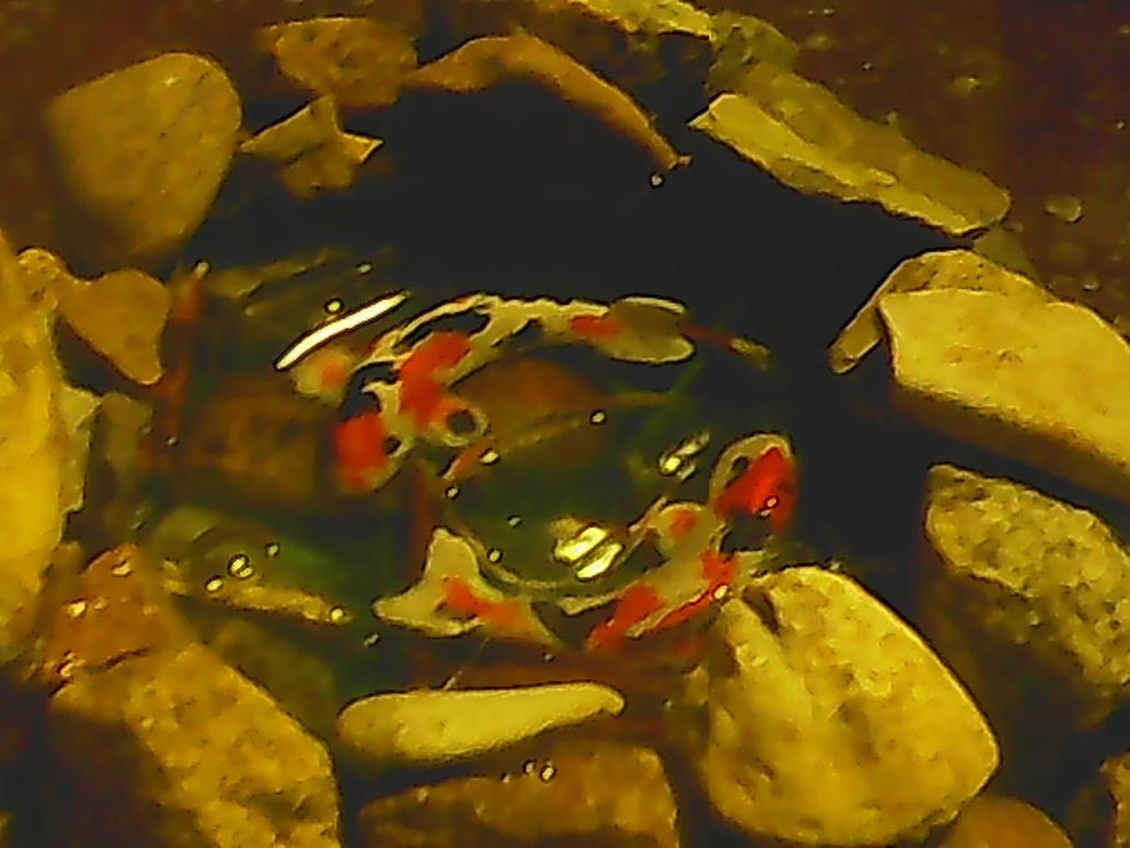 pisces koi fish pond by nightmaremoon14