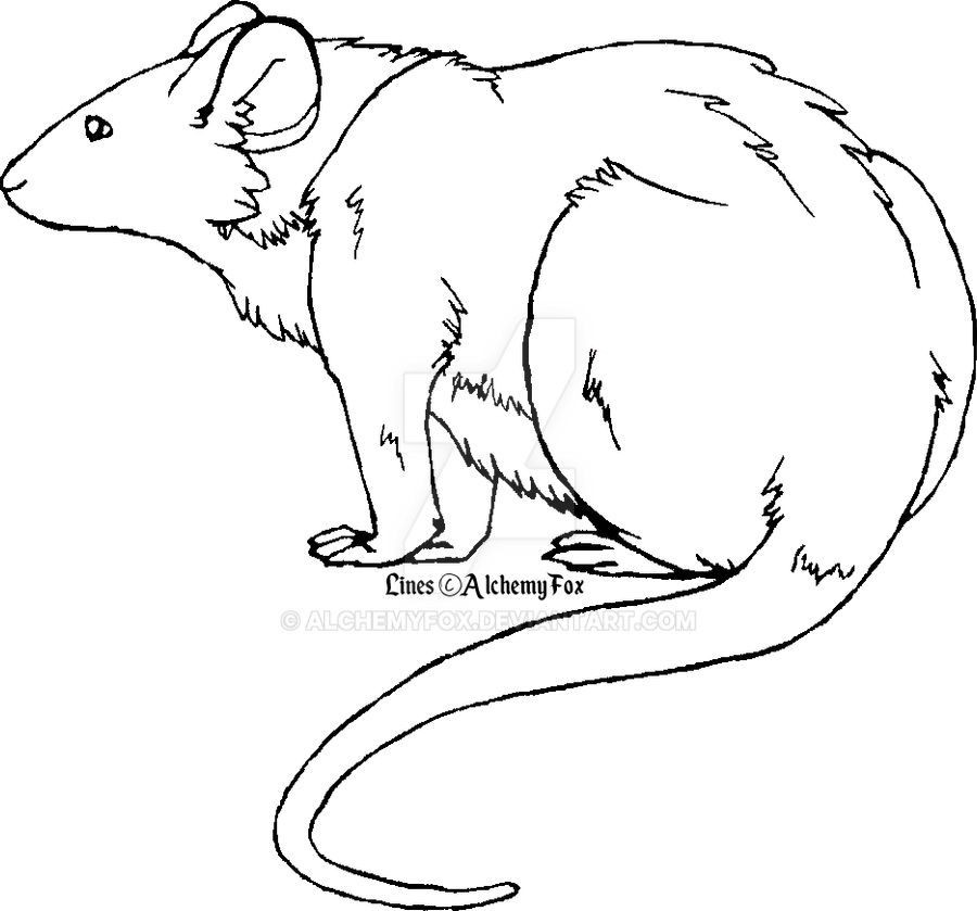 Rat Lineart