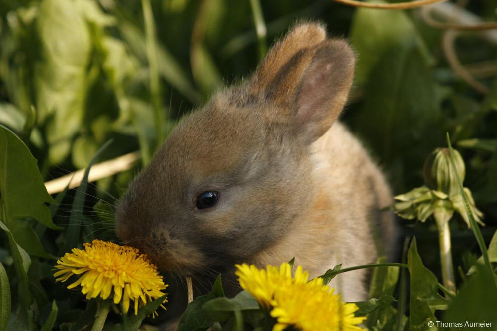 39 baby kaninchen bilder  besten bilder von ausmalbilder