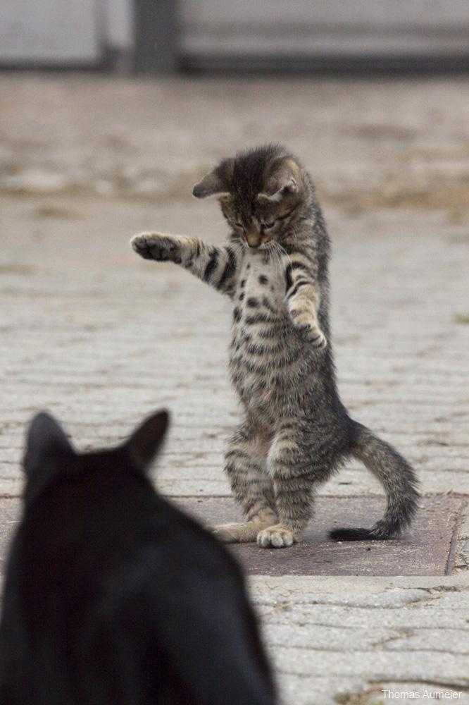 Dance kitten by Bastlwastl84