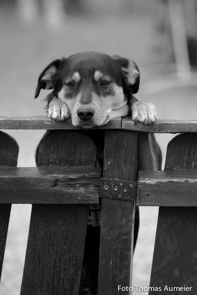 Hundeblick by Bastlwastl84