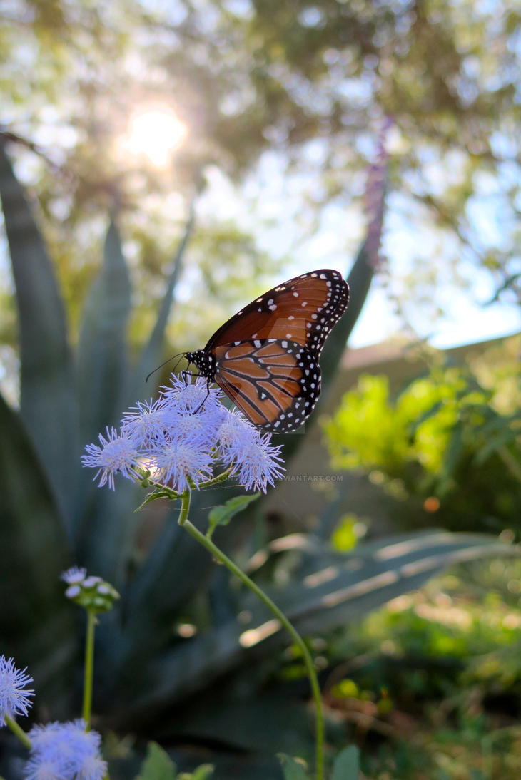 Monarch by lastoneontherack