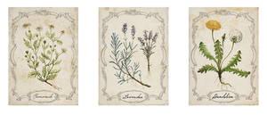 Zartana - Herb Cards