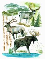 Watercolor Elk, Deer, and Moose by Blackwolfoffireworks