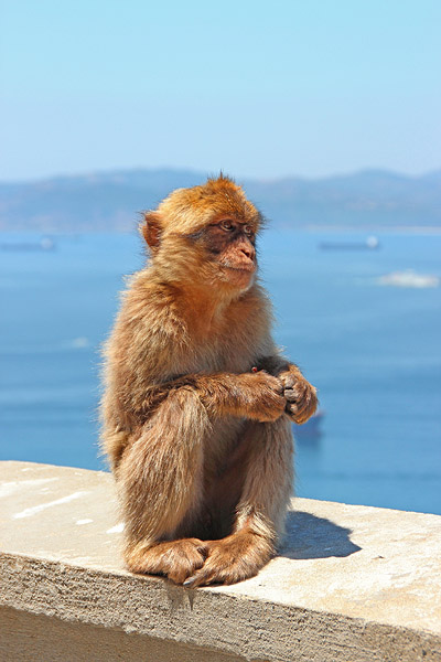 The Cutest Thing in Gibraltar by AgiVega