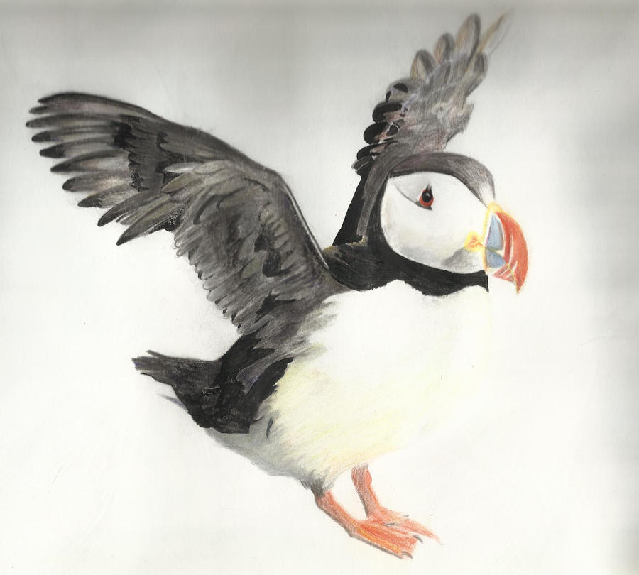 Mr Puffin :D by SoraSol