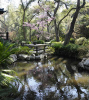 Cherry Blossoms Patio and Pond by AndySerrano