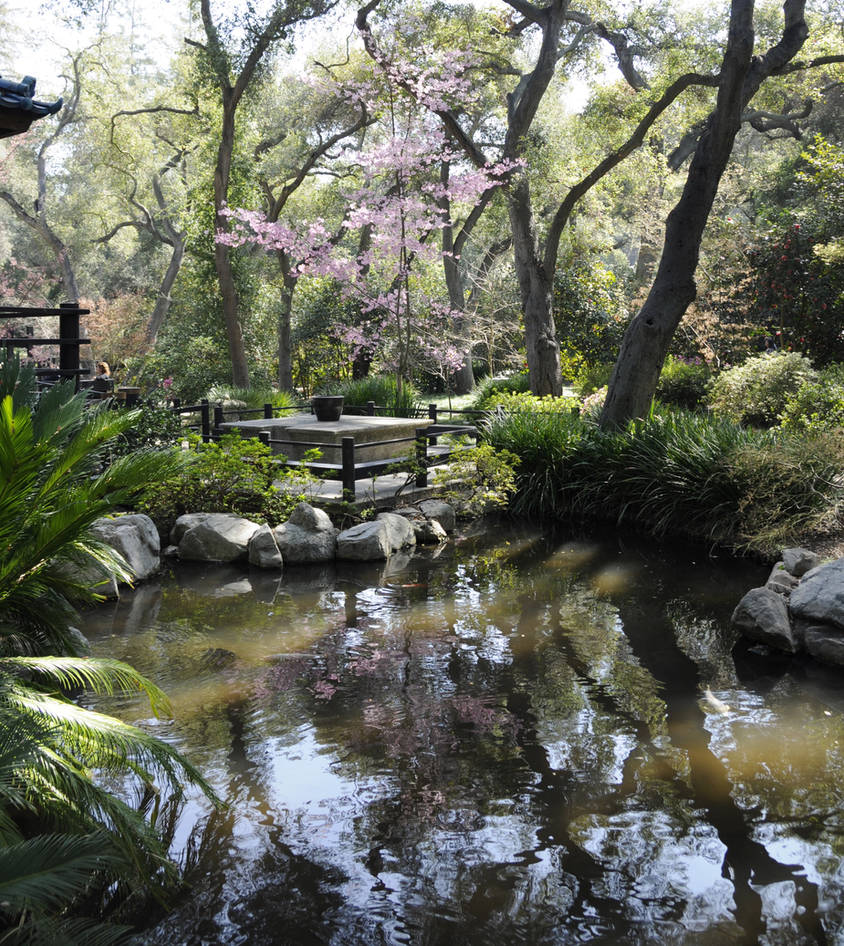 Cherry Blossoms Patio and Pond